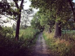wandelpad richting oude abdij van Drongen